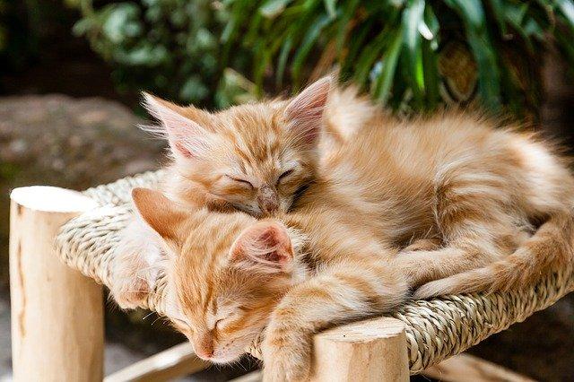 spící koťata