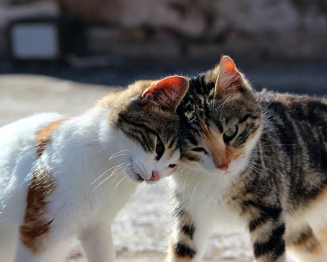 roztomilé kočky